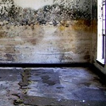 mold-remediation-1